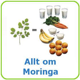 Allt om Moringa